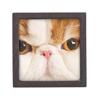 Domestic cat. Calico Harlequin Persian. Close up Keepsake Box