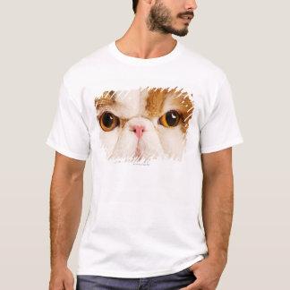 Domestic cat. Calico Harlequin Persian. Close up T-Shirt