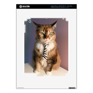 Domestic cat in a business Tie iPad 3 Decal