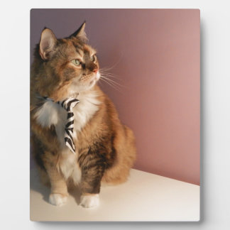 Domestic cat in a business Tie pic 2 Plaque