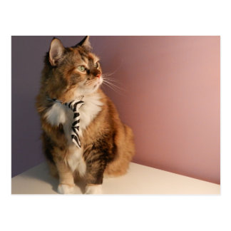 Domestic cat in a business Tie pic 2 Postcard