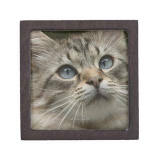 Domestic cat jewelry box