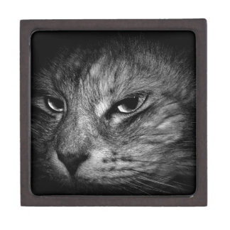 domestic-cat jewelry box