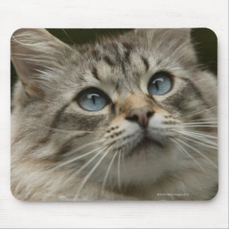 Domestic cat mouse pad