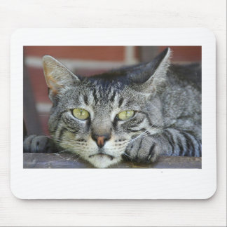 domestic-cat mouse pad