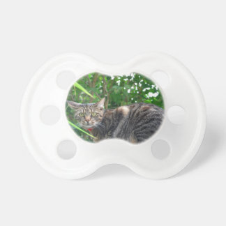 Domestic cat pacifier