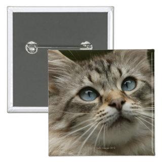 Domestic cat pinback button
