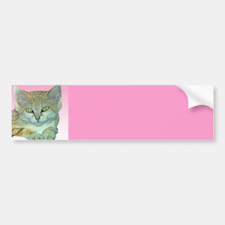 Domestic Cat, Pink Background Bumper Sticker