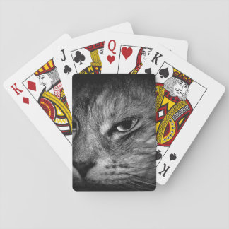 domestic-cat playing cards