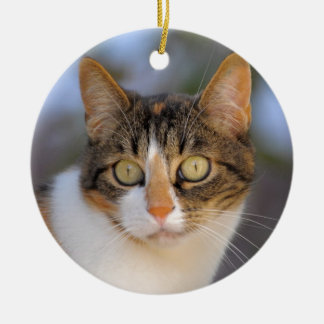 Domestic cat polychrome with view contact ceramic ornament