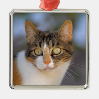 Domestic cat polychrome with view contact metal ornament