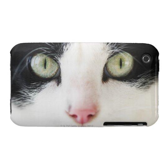 Domestic cat portrait iPhone 3 case