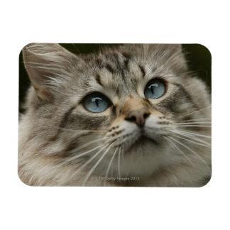 Domestic cat flexible magnets