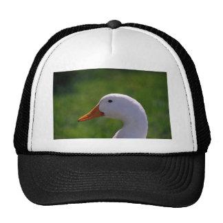 Domestic Duck Mesh Hat