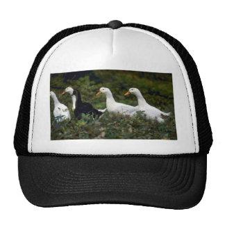 Domestic Ducks Mesh Hats