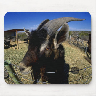 Domestic Goat Mouse Pad