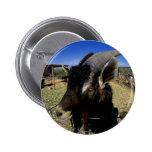 Domestic Goat Pinback Button