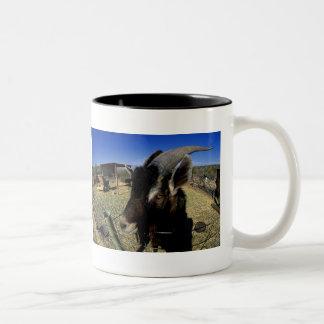 Domestic Goat Two-Tone Coffee Mug