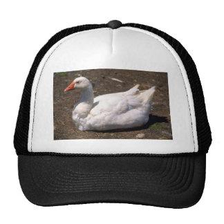 Domestic Goose Trucker Hats