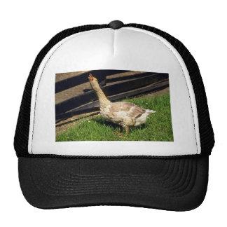 Domestic Goose Trucker Hat