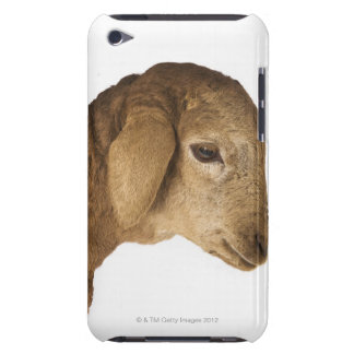 Domestic lamb iPod touch cover