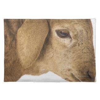 Domestic lamb cloth placemat