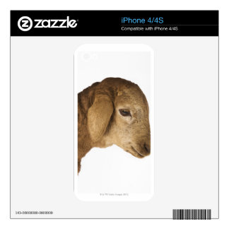 Domestic lamb decal for iPhone 4S