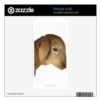 Domestic lamb iPhone 4S decal