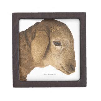 Domestic lamb jewelry box