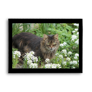 Domestic Long-Haired Cat Envelope