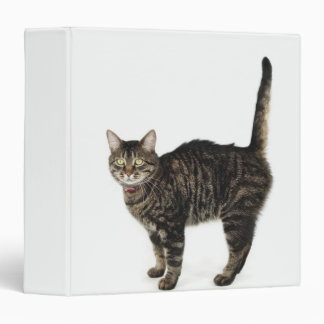 Domestic male tabby cat standing 3 ring binder