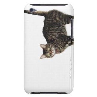 Domestic male tabby cat standing iPod touch cases