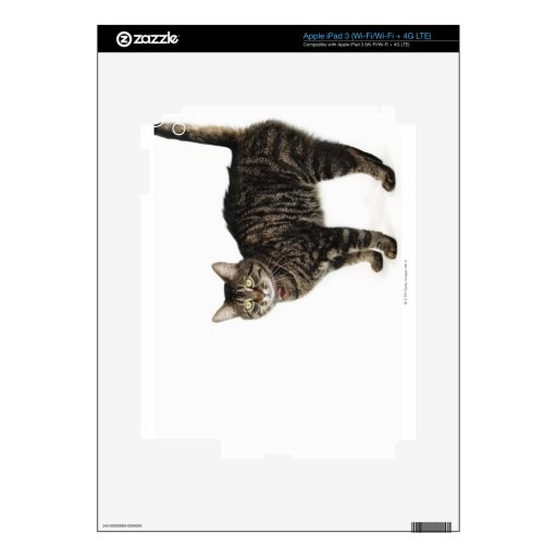 Domestic male tabby cat standing decal for iPad 3