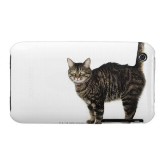 Domestic male tabby cat standing iPhone 3 Case-Mate case