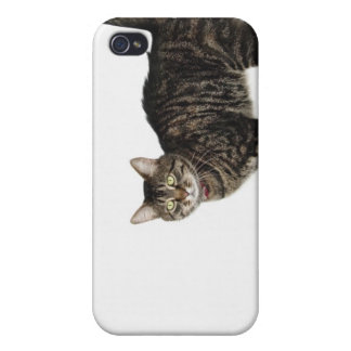 Domestic male tabby cat standing iPhone 4/4S case