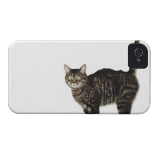 Domestic male tabby cat standing iPhone 4 case