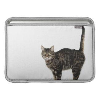 Domestic male tabby cat standing MacBook air sleeve