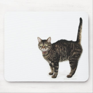 Domestic male tabby cat standing mouse pad