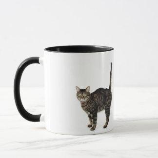Domestic male tabby cat standing mug