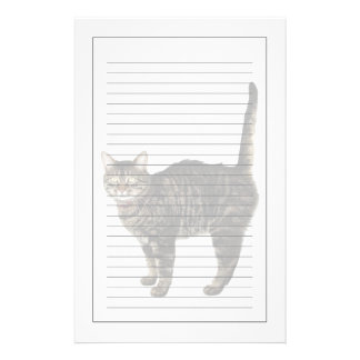 Domestic male tabby cat standing stationery