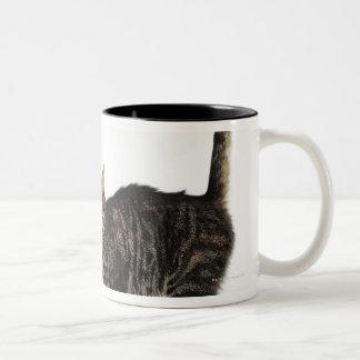 Domestic male tabby cat standing Two-Tone coffee mug