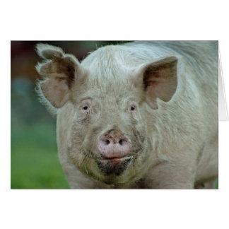 Domestic Pig Card