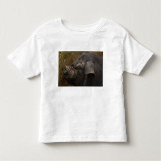 Domestic pig in Hani village. Yuanyang. Yunnan Toddler T-shirt