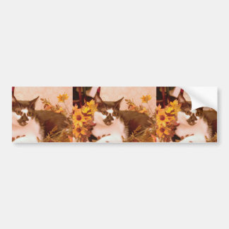 Domestic Short Haired Black And White Cat Perched Bumper Stickers