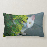 Domestic Short-Haired Cat Peaking Pillow