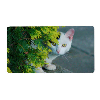 Domestic Short-Haired Cat Peaking Shipping Labels