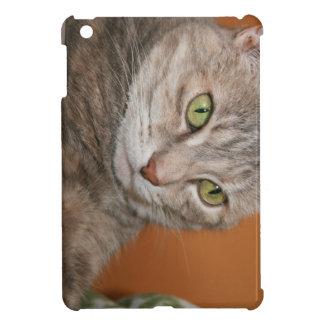 DOMESTIC SHORTHAIR CAT IPAD MINI CASE