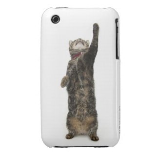 Domestic tabby cat standing on two legs reaching Case-Mate iPhone 3 case
