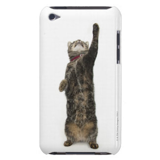 Domestic tabby cat standing on two legs reaching Case-Mate iPod touch case