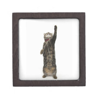Domestic tabby cat standing on two legs reaching jewelry box